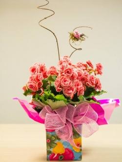 2 Begonia.jpg