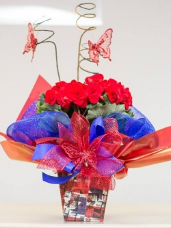 4 Begonia.jpg