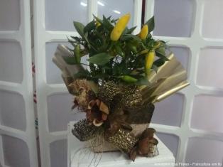 cestas-armazem-das-flores-itu-15