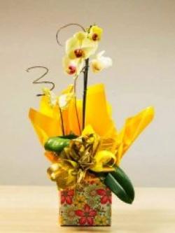 armazem-das-flores-itu-01