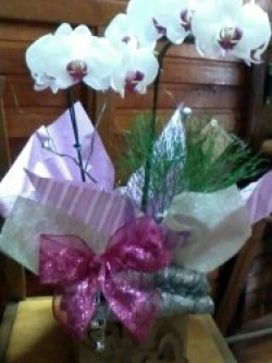 armazemdasflores-itu-orquideas-0001