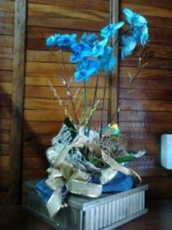 orquideas-armazem-das-flores-itu-02