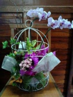 orquideas-armazem-das-flores-itu-03
