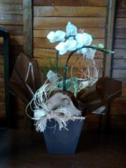 orquideas-armazem-das-flores-itu-04