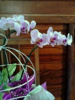 orquideas-armazem-das-flores-itu-05