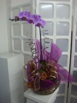orquideas-armazem-das-flores-itu-07