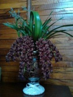 orquideas-armazem-das-flores-itu-08