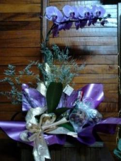 orquideas-armazem-das-flores-itu-09