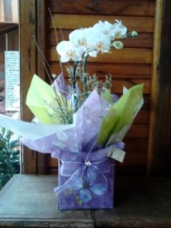 orquideas-armazem-das-flores-itu-10